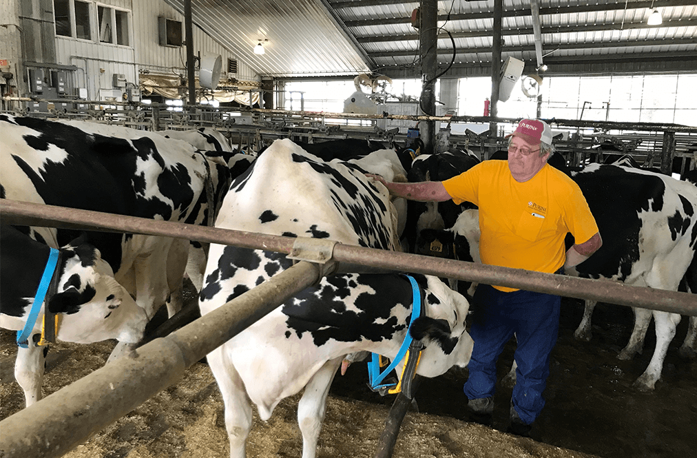 A Dairy Farmer With His Cows